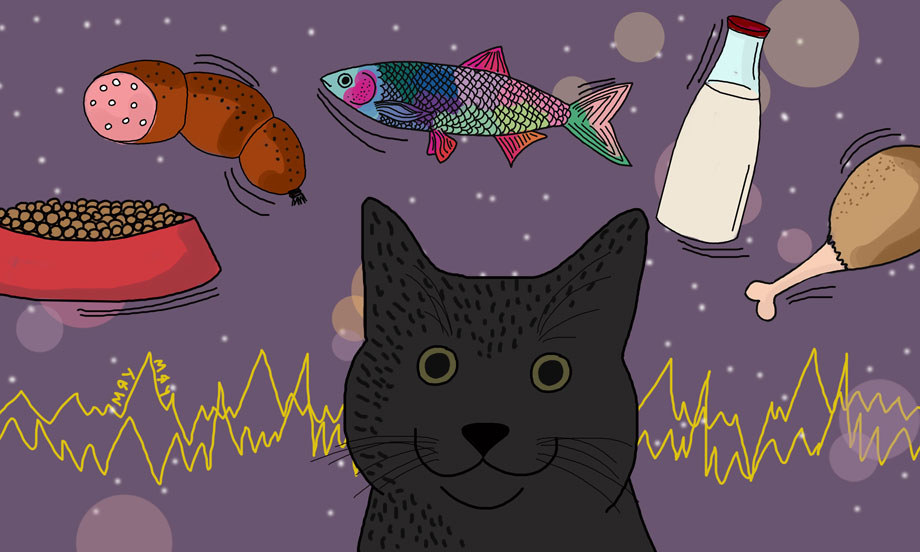 чем-можно-зарядить-кота