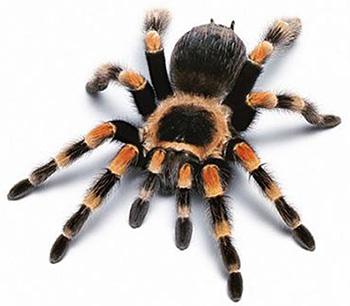 410-паук