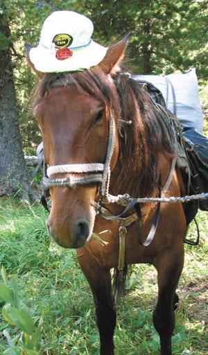 595-лошадь-3