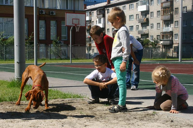 2015-dogs-sl-07