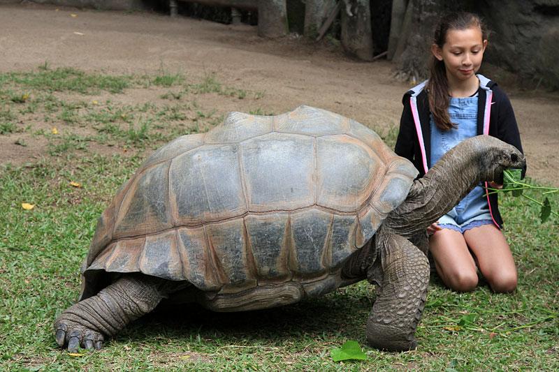 2015-zoo-черепаха