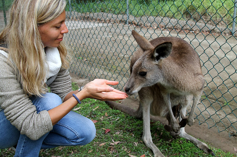 2015-zoo-кенгуру-2