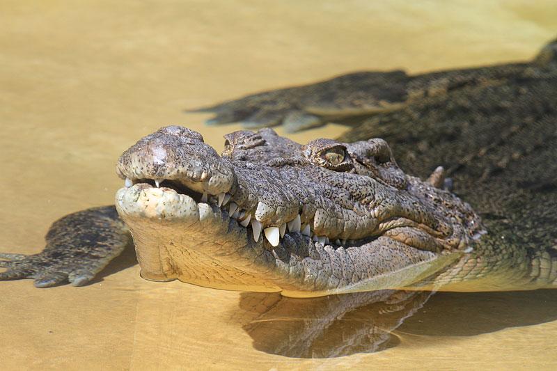 2015-zoo-krokodil-1