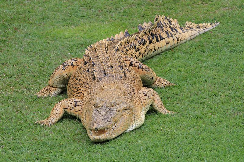 2015-zoo-krokodil-2