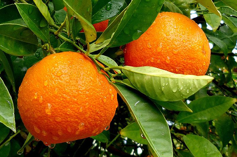 2015-landing-apelsin-13